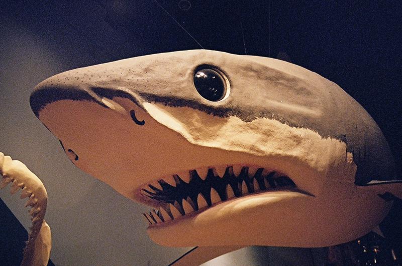 south carolina state museum shark