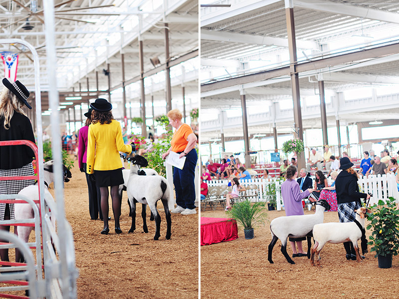 ohio state fair sheep showing