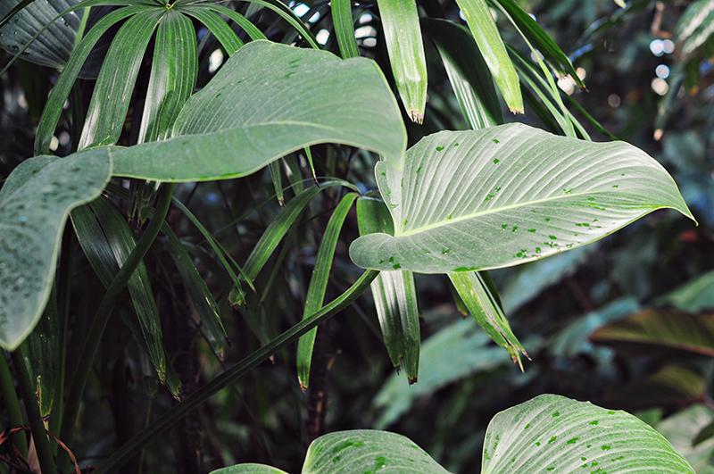 Leaves-franklin-conservatory
