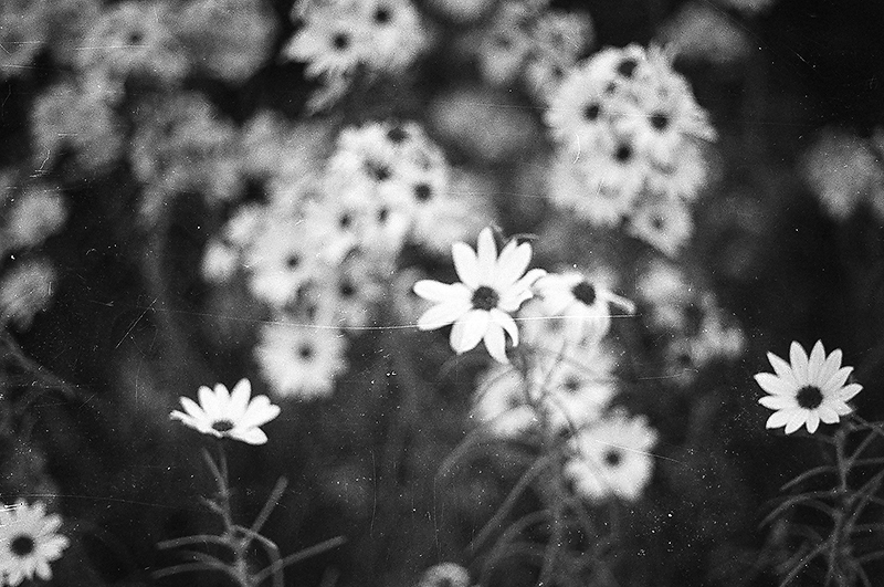 Black and white film flowers